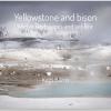 Yellowstone by Katti Borre
