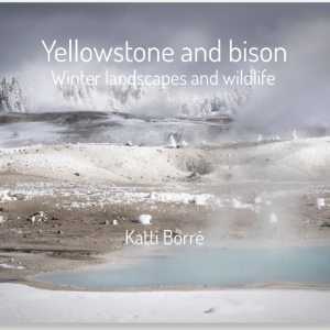 Yellowstone by Katti Borre