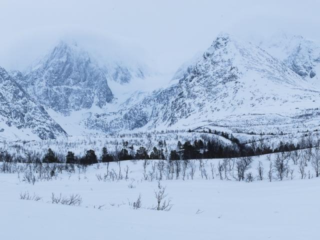 Norway Sonja winterlandscape katti borre