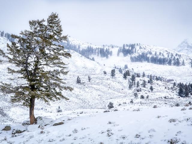 Yellowstone winter landscape Katti Borre