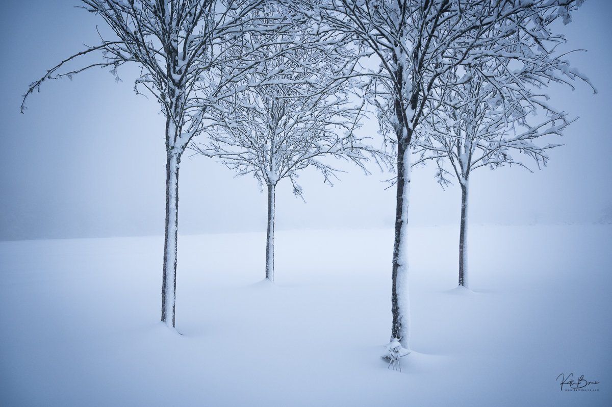winterwonderland by katti borre