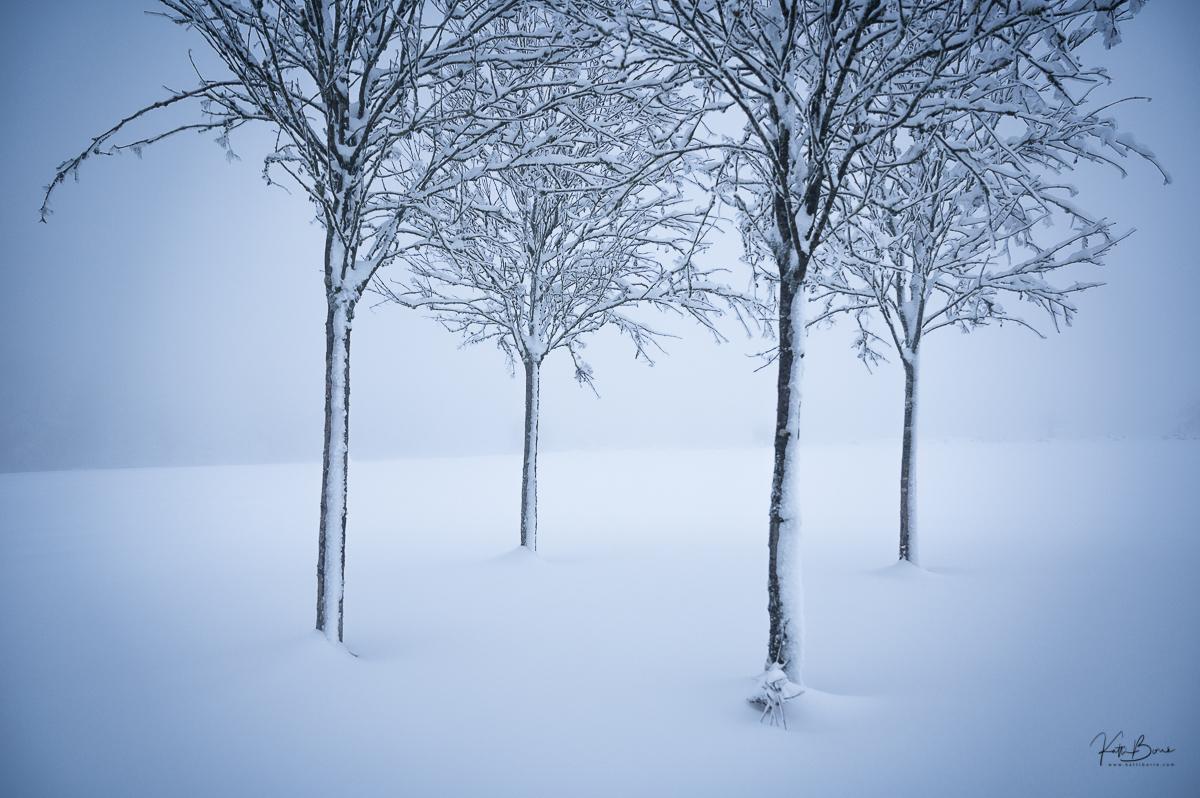 winterwonderland by katti borre