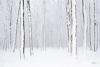 sneeuw Katti Borre